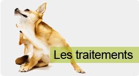 puce chien traitement naturel